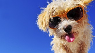 6 Ways to Keep Your Pet Healthy this Summer