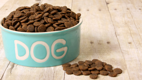 How to Find the Best Food for Your Dog (Interview)