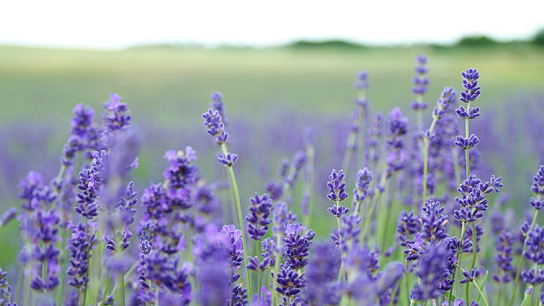 How to Use Essential Oils for Anxiety, Stress, Depression and Sleep