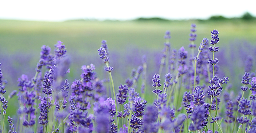 How to Use Pure Essential Oils for Anxiety, Sleep & Depression