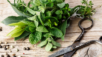 5 Adaptogen Herbs to Reduce Stress