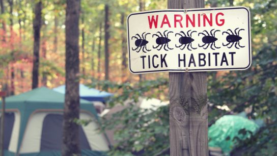 Lyme Disease 101: What You Need to Know to Protect Yourself