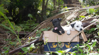 These dogs need us! Fundraiser (plus, self-care for YOU!)
