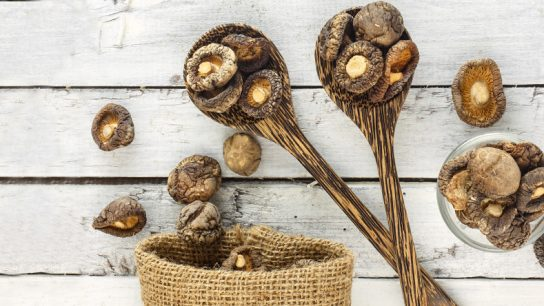 The Healing Power of Medicinal Mushrooms