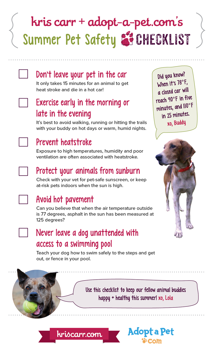 Summer Pet Safety Checklist