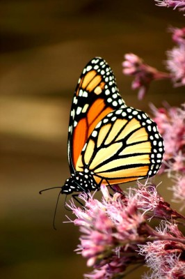 buttefly-on-a-flower-266x400.jpg